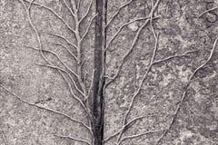 Усики растя на камне гранита Стоковые Изображения