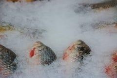 Условия хранения свежих рыб в льде откалывают стоковое фото rf