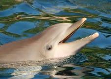 Усмехаться дельфина Стоковое Изображение RF