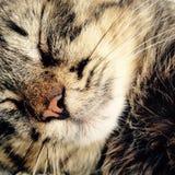 усмехаться кота Стоковые Фото