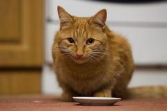 усмехаться красного цвета кота Стоковые Фотографии RF