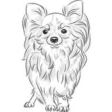 Усмехаться породы чихуахуа собаки эскиза вектора Стоковое фото RF