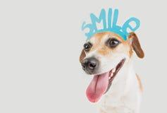 усмехаться собаки счастливый стоковые изображения rf