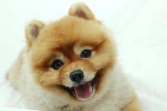 усмехаться собаки Стоковое Изображение