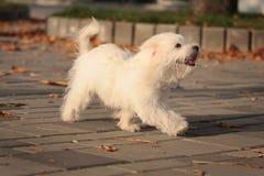 усмехаться щенка Стоковые Фото