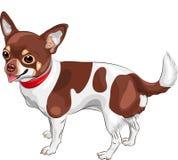 усмехаться breed чихуахуа собаки эскиза вектора Стоковая Фотография RF