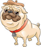 усмехаться pug шлема Стоковые Фото