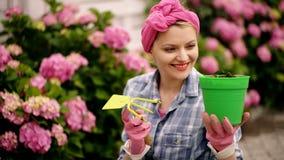 Усмехаясь женщина держит бак цветков на заднем плане против розовой гортензии Женщина заботит для неимоверно красивого акции видеоматериалы