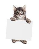 Усмехаясь котенок держа пустой знак стоковые фотографии rf