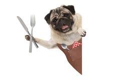 Усмехаясь мопс выслеживает нося кожаную рисберму барбекю, задерживая столовый прибор для еды еды, с пустым знаменем Стоковые Изображения RF
