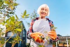 Усмехаясь приятная дама проводя день в саде стоковое фото