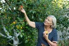 Усмехаясь сад яблок рудоразборки женщины Стоковые Фото