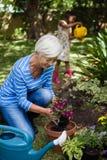 Усмехаясь старшая женщина засаживая цветки пока заводы девушки моча Стоковое Изображение RF