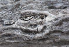 Усмехаясь сторона в стволе дерева Стоковая Фотография RF