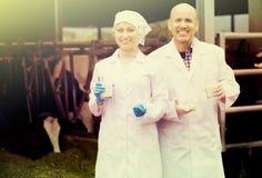 Усмехаясь человек и женщина в белых пальто с коровами Стоковая Фотография