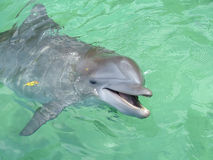 усмешка дельфина Стоковые Фото