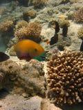 усмешка рыб Стоковая Фотография RF