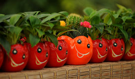 усмешка цветка Стоковая Фотография