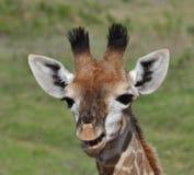 усмешка giraffe Стоковые Изображения RF