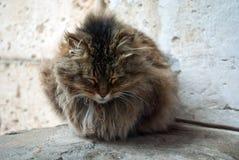 уснувший кот Стоковые Фото
