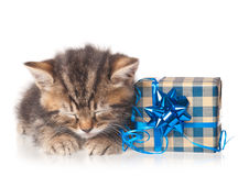 Уснувший милый котенок Стоковые Фотографии RF