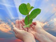 Успех будущего роста Стоковые Изображения