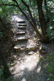 успех лестниц иллюстрации принципиальной схемы 3d деревянный Стоковое фото RF
