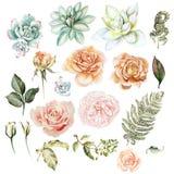 установите акварель Покрашенная рука розовой и суккулентной Флористическая иллюстрация изолированная на белой предпосылке Стоковая Фотография RF