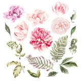 установите акварель Покрашенная рука розовой и цветки пиона Флористическая иллюстрация изолированная на белой предпосылке Стоковое Изображение RF