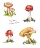 Установите акварель гриба: мухомор, лисичка, volnushki Стоковое Фото