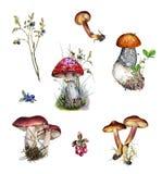 Установите ботанической иллюстрации заводов, ягод и грибов леса стоковые фото