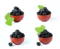 Установите гибридные поленики, черные ягоды на белой предпосылке Стоковые Изображения RF