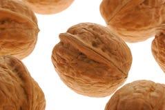установите грецкий орех Стоковая Фотография RF