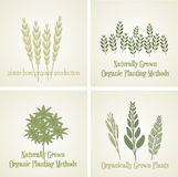 Установите завод логотипа органический, вектор Стоковое Фото