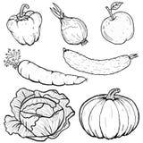 Установите иллюстрацию собрания овощей в линии искусстве Стоковая Фотография