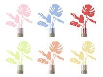 установите комнатных растений в баки стоковое фото rf