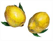 Установите лимонов r иллюстрация штока