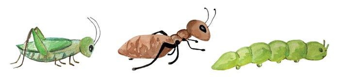 Установите насекомых - муравья, гусеницы и кузнечика иллюстрация акварели для дизайна иллюстрация штока