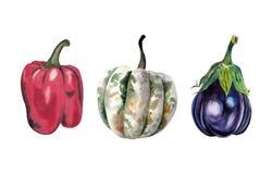 Установите овощей акварели: тыква, перец, баклажан изолированный на белой предпосылке иллюстрация вектора