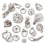 установите овощи вектора Стоковая Фотография RF