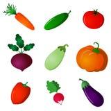 установите овощи Стоковое фото RF