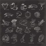 установите овощи Vector иллюстрация эскиза чертежа руки на черной предпосылке Стоковое фото RF
