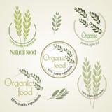 Установите логотип для органически, который выросли еды, вектор Стоковое фото RF