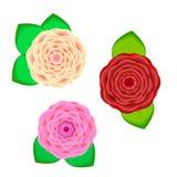 Установите от реалистических цветков Стоковое Изображение