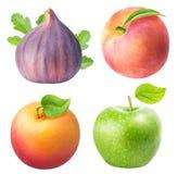 Установите от яблока, смоквы, абрикоса, персика изолированного на белой предпосылке Стоковое фото RF