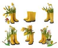 Установите 6 пар желтых gumboots и daffodils, тюльпанов, iso мимозы Стоковые Изображения RF