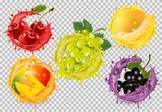 Установите плода в выплеске сока Виноградины, вишня иллюстрация штока