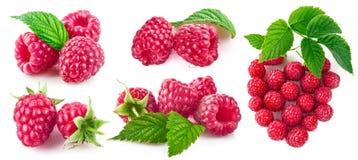 Установите поленику ягоды с зеленым собранием лист стоковые изображения