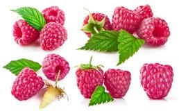 Установите поленику ягоды с зеленым собранием лист стоковые фотографии rf