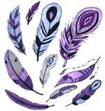 Установите пурпурных пер птицы изолированных на белизне искусство отметки концепция для карт, поздравления, клеймя бесплатная иллюстрация